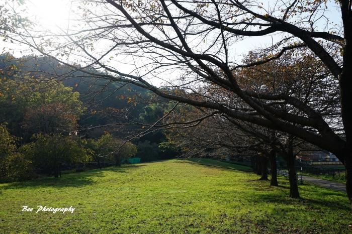 bee-片倉城跡2942
