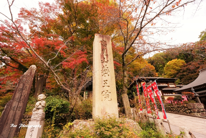 bee-高尾山3192