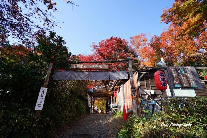 bee-高尾山もみじ台3886