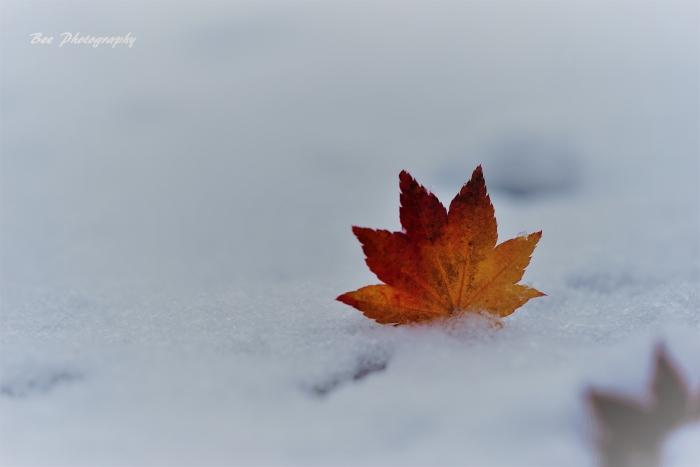 bee-雪4254