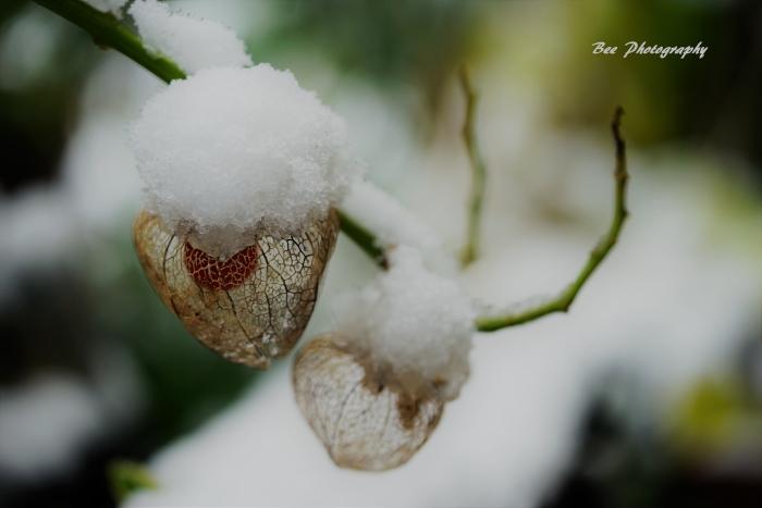 bee-雪4257