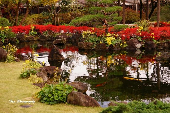 bee-高尾駒木野庭園3473