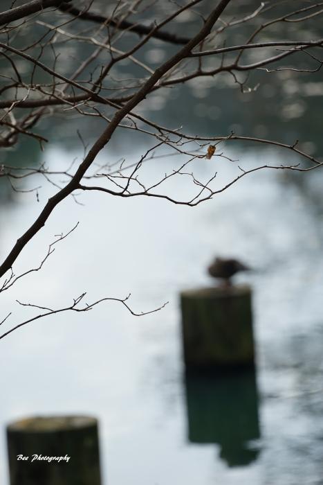 bee-長池公園6312