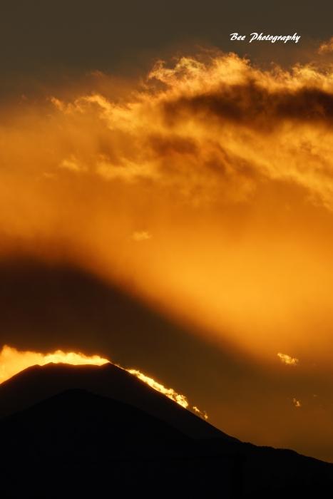 bee-富士山7485