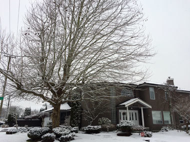 snowday_vancouver_part3_2.jpg