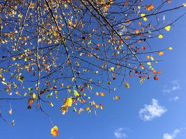 vancouver_fall-2016_8.jpg