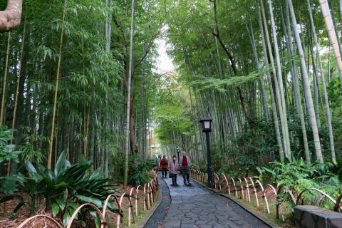 20修善寺竹の小径