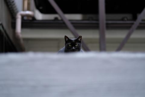 01新宿4丁目の黒猫