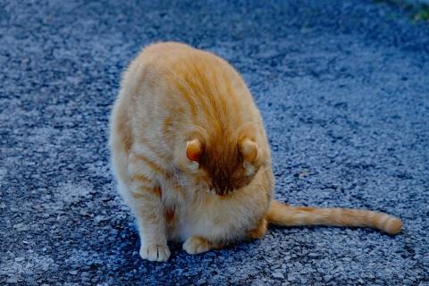 04日帰り温泉のネコ