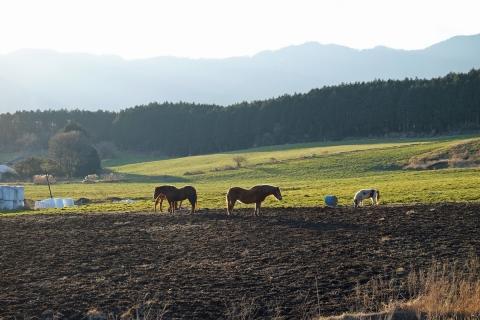27R139の牧場