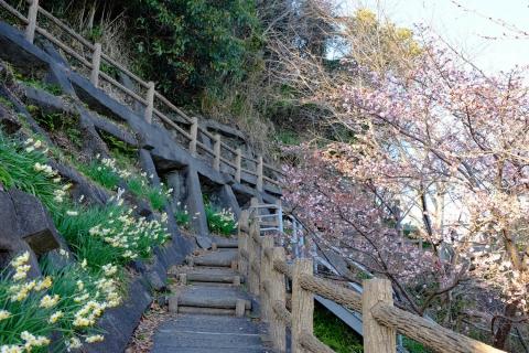 40薩埵峠へ 桜