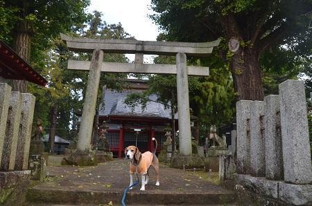 20161112茨城百景 化蘇稲荷神社11