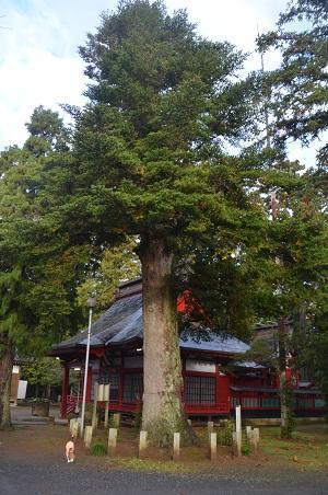 20161112茨城百景 化蘇稲荷神社16