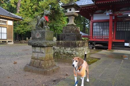 20161112茨城百景 化蘇稲荷神社13