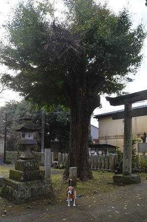 20161112茨城百景 化蘇稲荷神社20