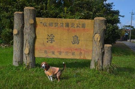 20161112茨城百景 夢の浮島01