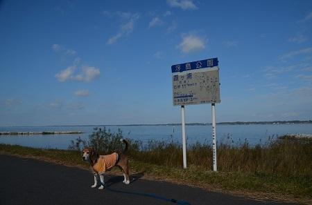 20161112茨城百景 夢の浮島16