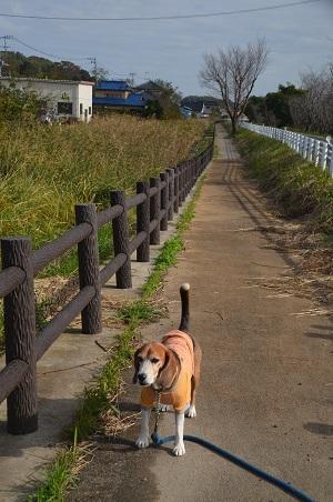 20161112茨城百景 夢の浮島28
