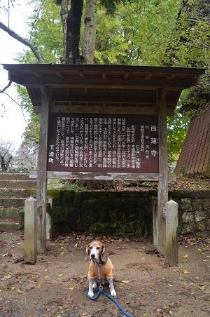 20161112茨城百景 西連寺17
