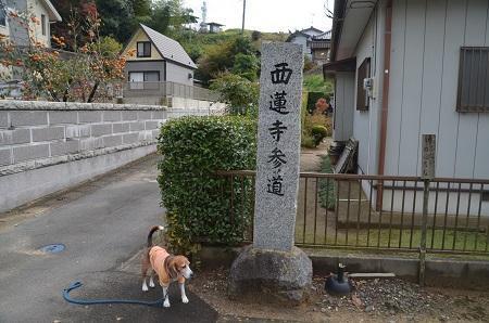 20161112茨城百景 西連寺29