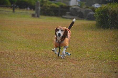 20161112天王崎公園10