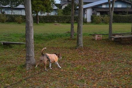 20161112高須崎公園24