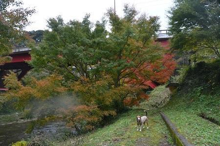 20161116養老渓谷八景 懸崖鏡04