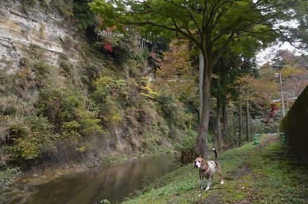 20161116養老渓谷八景 懸崖鏡09