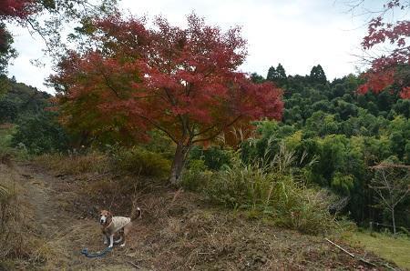 20161116養老渓谷八景 金神の滝05