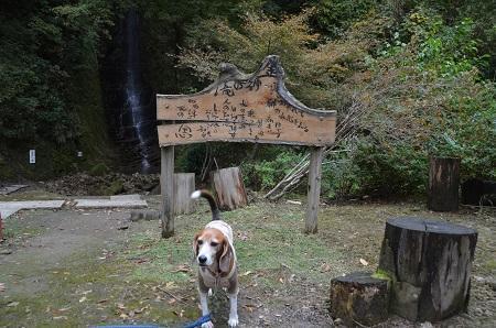 20161116養老渓谷八景 金神の滝08