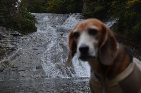 20161116養老渓谷八景 粟又の滝11