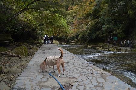 20161116養老渓谷八景 粟又の滝13