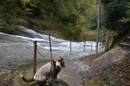 20161116養老渓谷八景 粟又の滝22