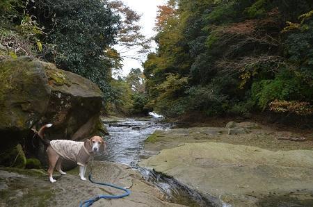 20161116養老渓谷八景 粟又の滝20