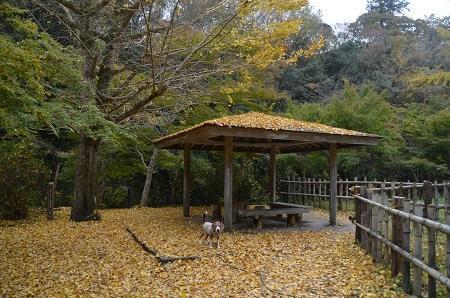 20161116養老渓谷八景 弘文洞跡20