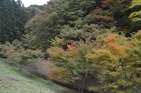 20161116養老渓谷八景 筒森もみじ谷10