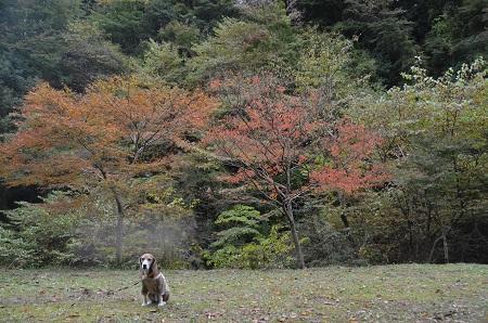 20161116養老渓谷八景 筒森もみじ谷15