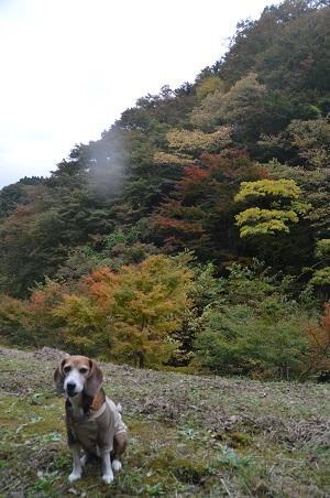 20161116養老渓谷八景 筒森もみじ谷12