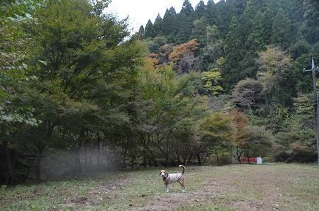 20161116養老渓谷八景 筒森もみじ谷19