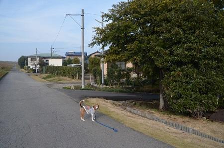 20161120関宿城址23