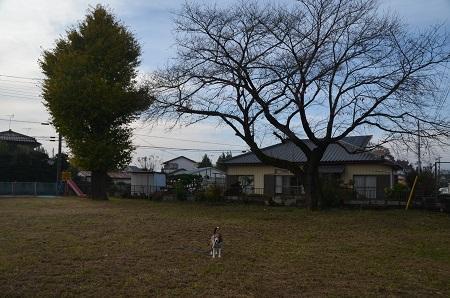 20161120豊岡小学校05