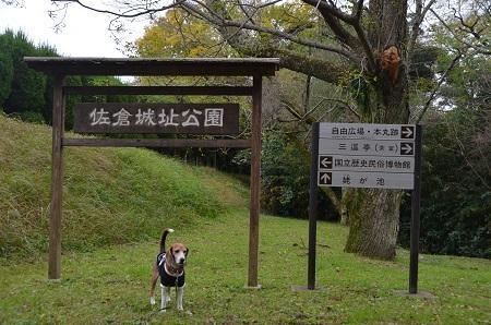20161121佐倉城址公園06