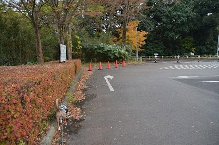 20161121佐倉城址公園02