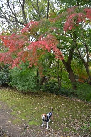 20161121佐倉城址公園16