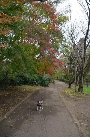20161121佐倉城址公園15