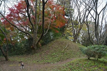20161121佐倉城址公園35