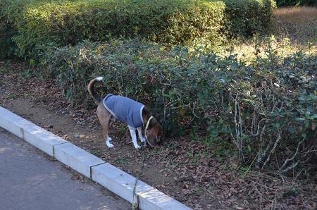 20161202佐倉城址公園