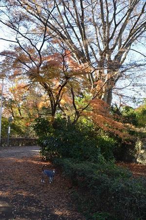20161202佐倉城址公園03