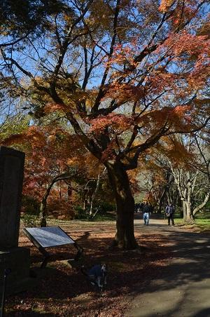 20161202佐倉城址公園12