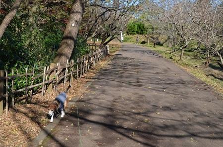 20161202佐倉城址公園10